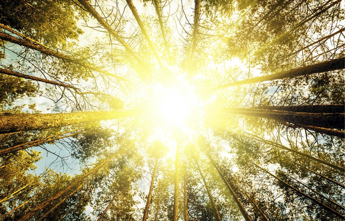 自然の暖かさがもたらす、健やかな毎日